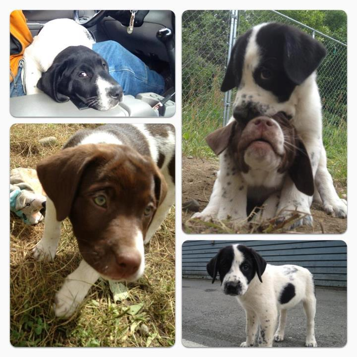 A collage made highlighting individual pups easy.