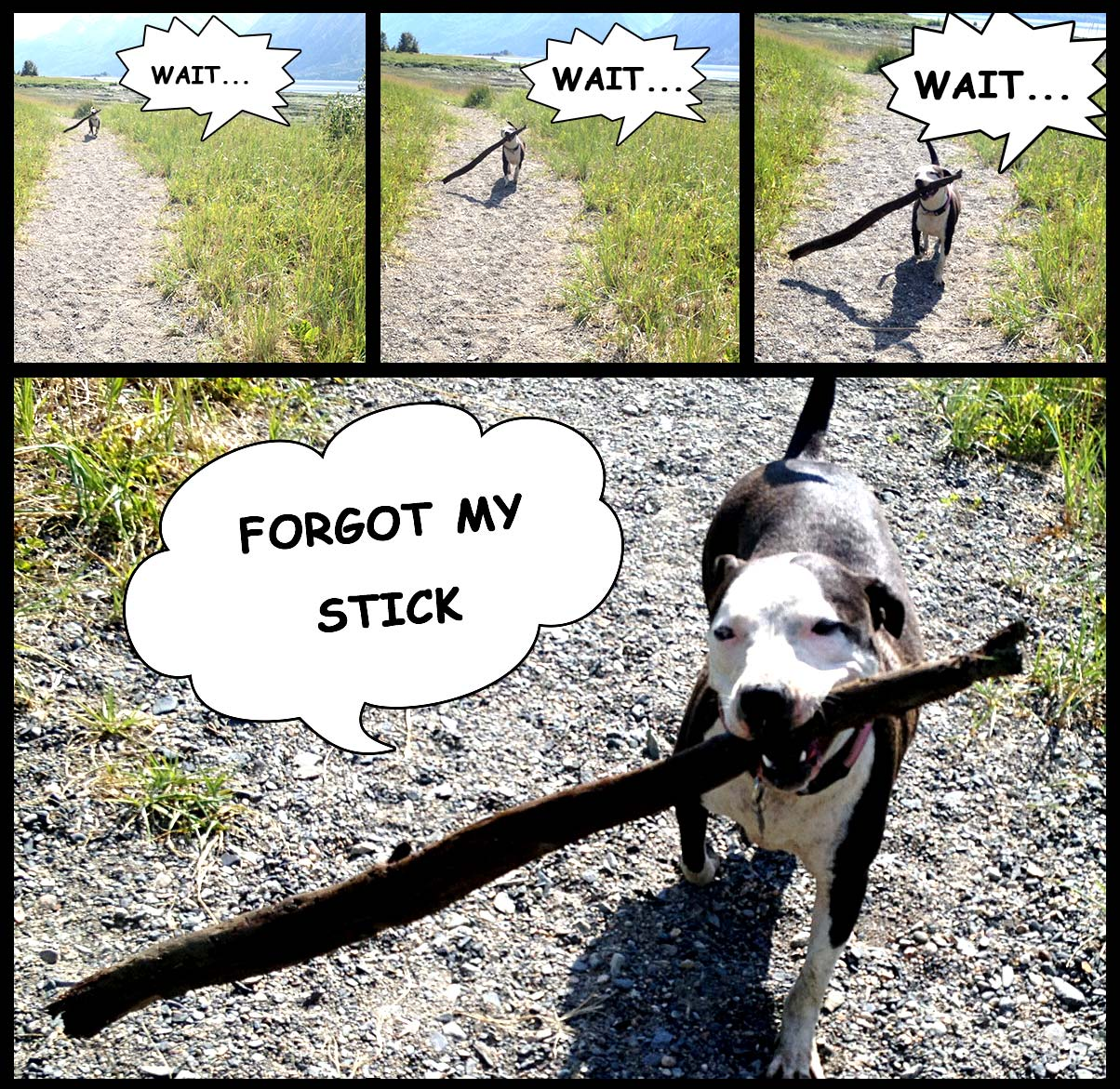 Anyone with a stick-obsessed dog could relate to this post.